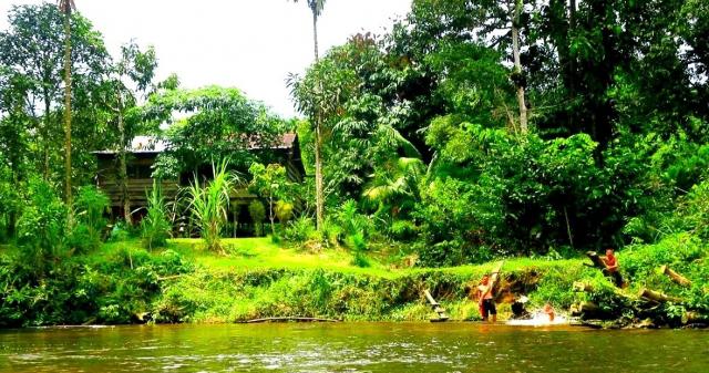 東南アジアのジャングル