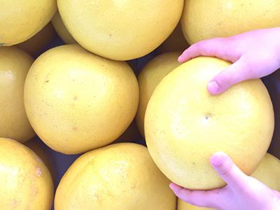 大玉なグレープフルーツ