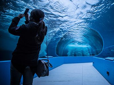 水族館の海中トンネル